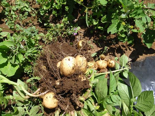 【お庭と食卓】収穫の楽しみ、管理の楽...