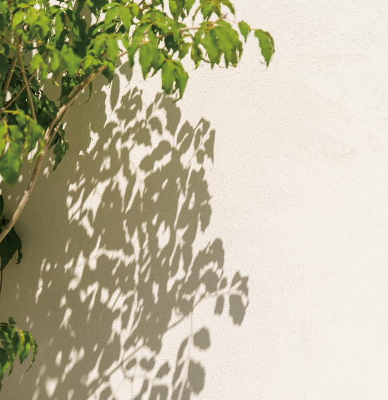 庭を囲む外壁に植栽と影。色のコントラストを楽しむ。