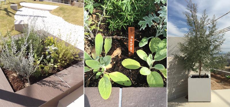 グリーン好きのご夫婦のための菜園スペース。ラムズイヤーや鉢植えのユーカリも。